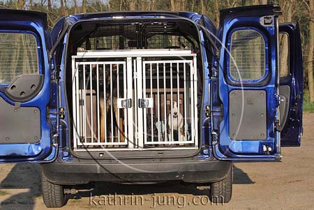 3 hunde im auto hundetransportbox bullterrier prager. Black Bedroom Furniture Sets. Home Design Ideas